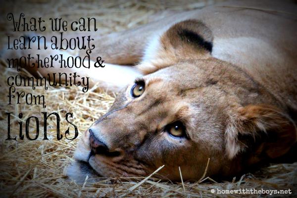 Community of Lions