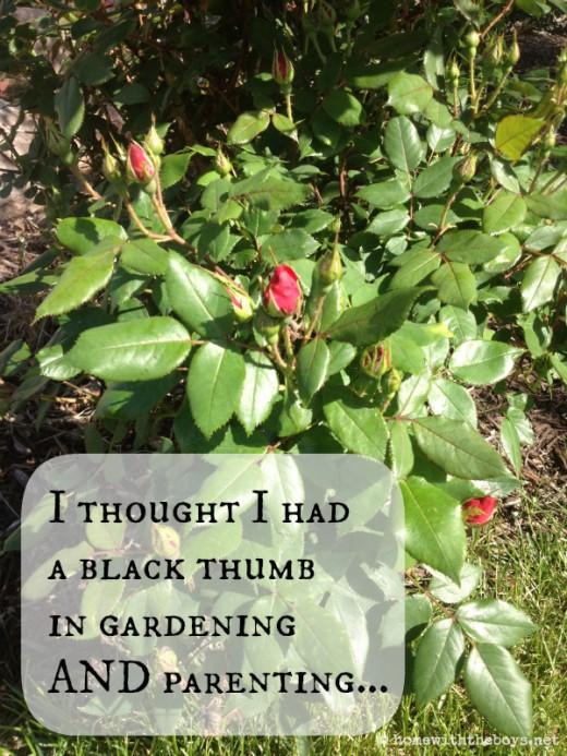 Garden Black Thumb
